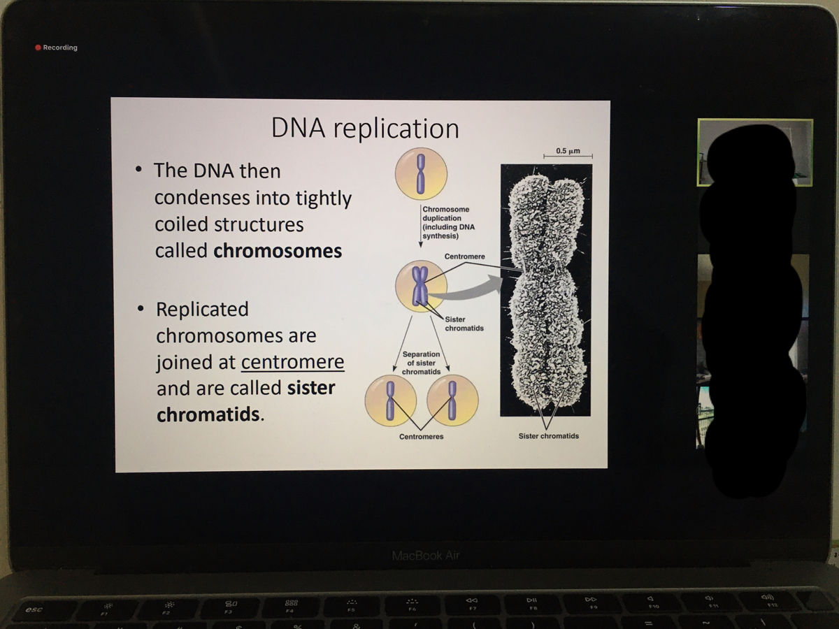 f:id:cellmembrane:20200721203122j:plain