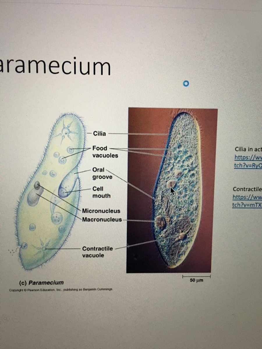 f:id:cellmembrane:20200721204621j:plain