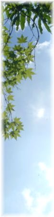 f:id:cerefica:20060815143832j:image
