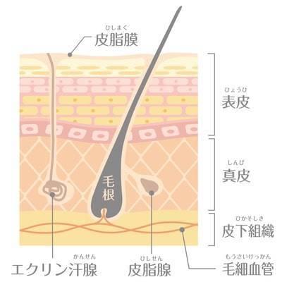 """<img src=""""drink.jpg"""" alt=""""3. 白髪が増える原因 """">"""