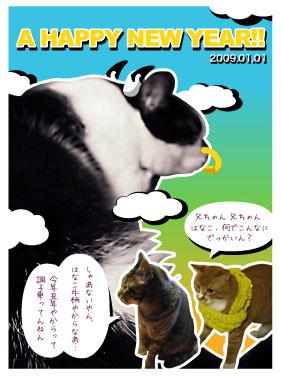 f:id:cha-ko:20090102023710j:image:right