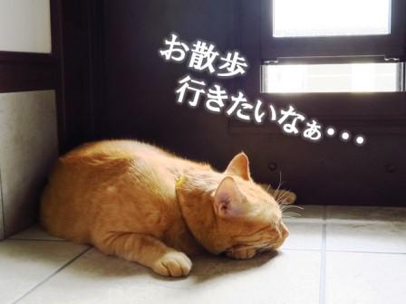 f:id:chai-ko:20161015153631j:plain
