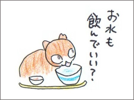 f:id:chai-ko:20170223222932j:plain
