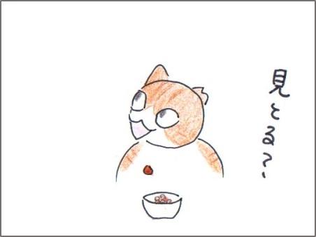 f:id:chai-ko:20170225205829j:plain