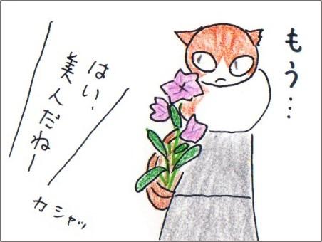 f:id:chai-ko:20170709205351j:plain