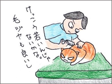 f:id:chai-ko:20190429201152j:plain