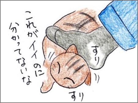 f:id:chai-ko:20190515201026j:plain