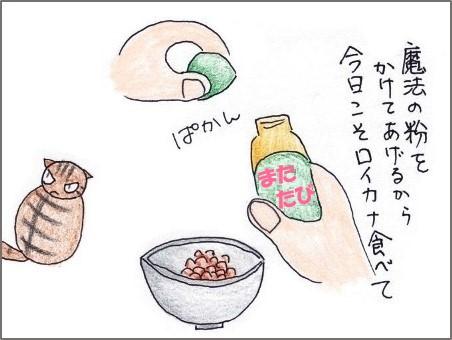 f:id:chai-ko:20190610201204j:plain