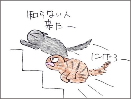 f:id:chai-ko:20200317200626j:plain