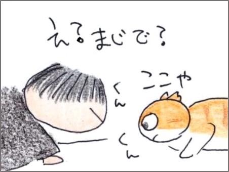 f:id:chai-ko:20200329192958j:plain