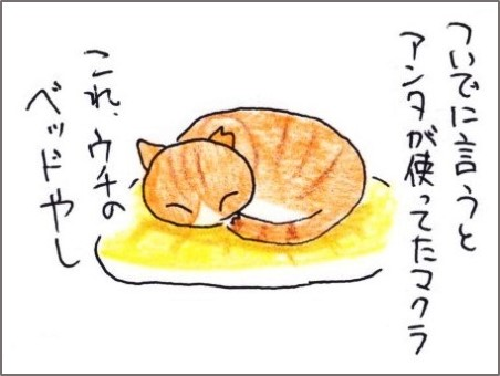 f:id:chai-ko:20200805191731j:plain