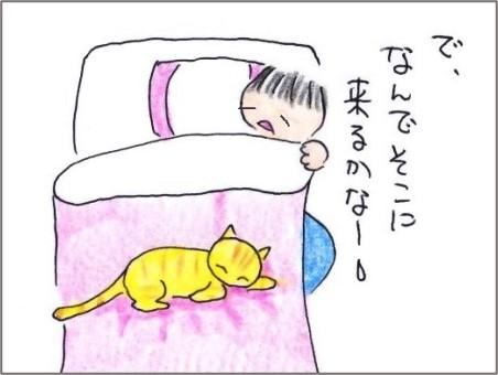 f:id:chai-ko:20201106201112j:plain