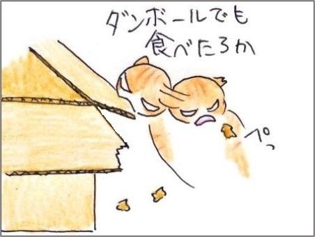 f:id:chai-ko:20210109194618j:plain