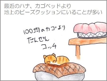 f:id:chai-ko:20210129190003j:plain