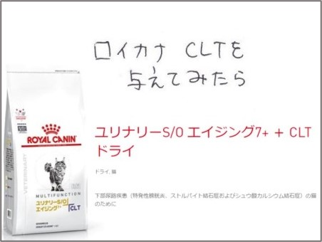 f:id:chai-ko:20210518200639j:plain