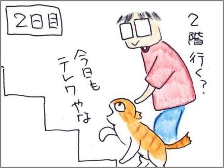 f:id:chai-ko:20210526184922j:plain