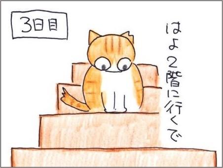 f:id:chai-ko:20210526184924j:plain