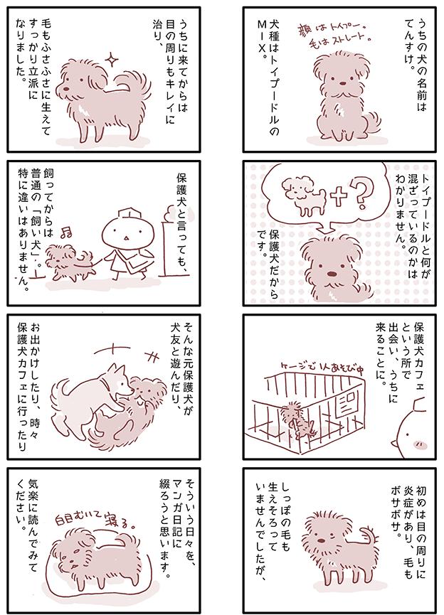 保護犬の漫画