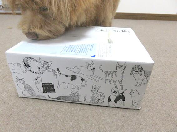 犬用iDog福袋が入っている箱の写真