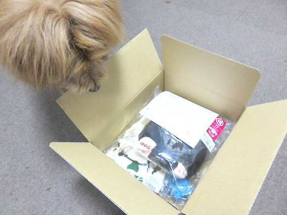 犬用被り物の写真