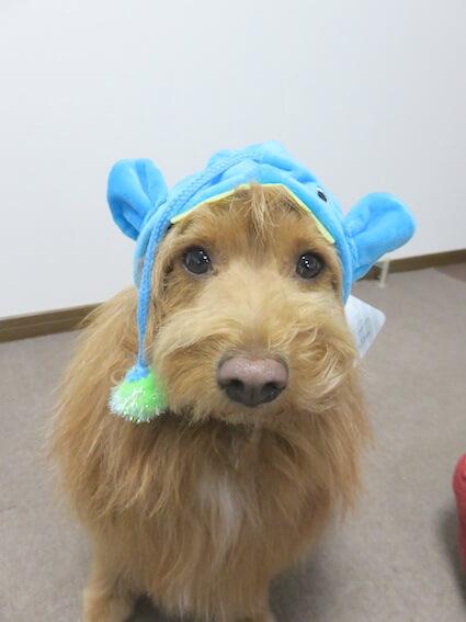 提灯鮟鱇のかぶりものを被った犬の写真