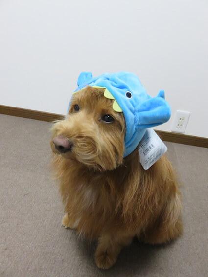 チョウチンアンコウのぬいぐるみをかぶった犬の写真