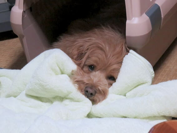 クレートで寝ている犬の写真
