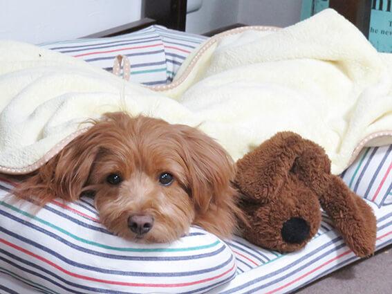 ぬいぐるみと添い寝する犬の写真