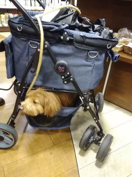 ドッグカートに入った犬の写真