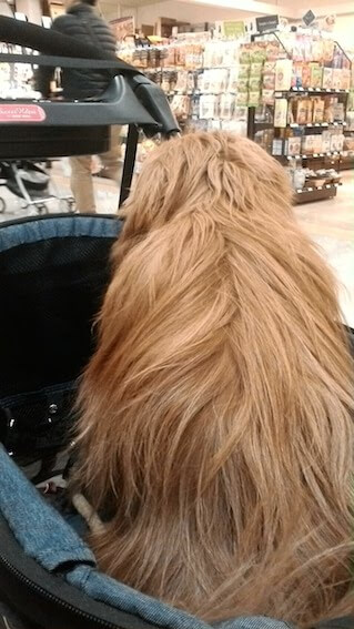 ふわふわした犬の背中の写真