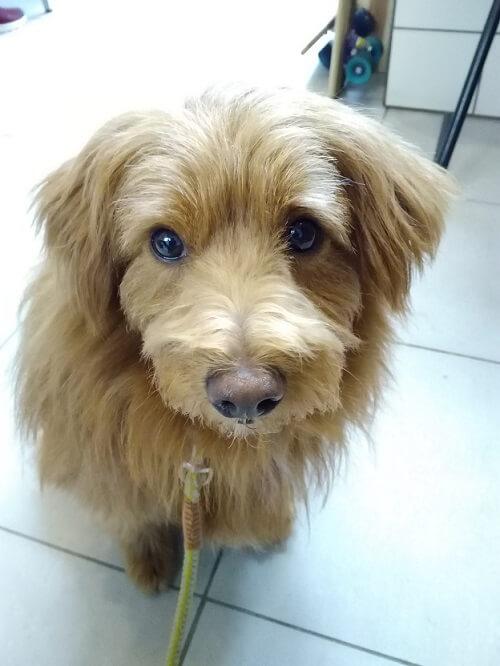 置いて行かれたくない犬の写真