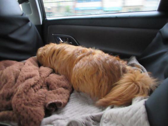 犬用ドライブシートに乗っている犬の写真