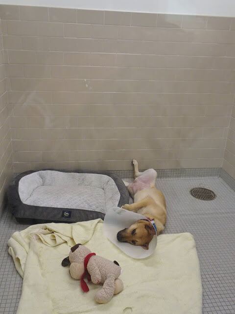 動物シェルターにいる犬の写真