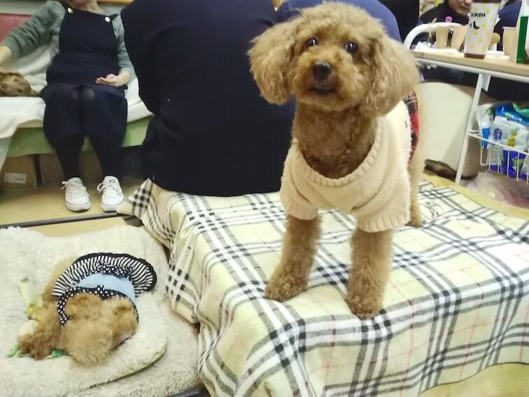 保護犬カフェ天神橋店の店内の写真