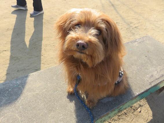 ベンチにおすわりする犬の写真