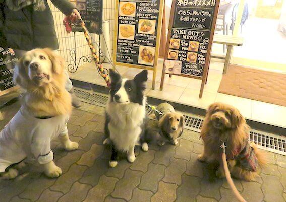 ドッグカフェの前で犬が集合している写真