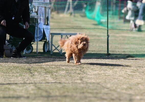 ボサボサな犬の写真