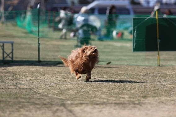 走り出す犬の写真