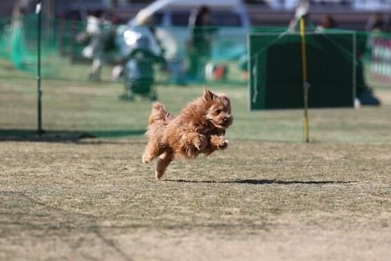 全力疾走する犬の写真