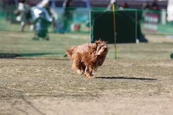 飛行犬の写真