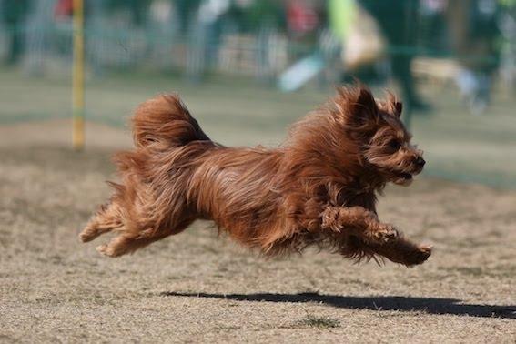 うさぎのような走り方の犬の写真