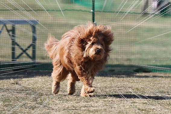 衝撃的な犬の写真