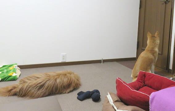 おすわりする柴犬の写真