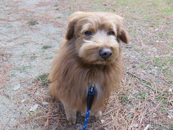 不機嫌な顔の犬の写真