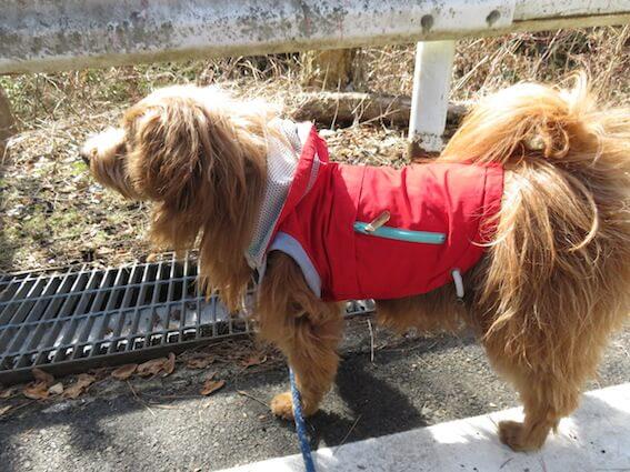 赤いウインドブレーカーを着た犬の写真