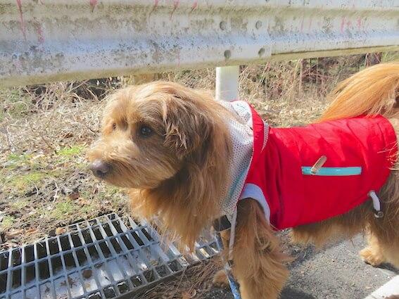 アウトドア用の服を着た犬の写真