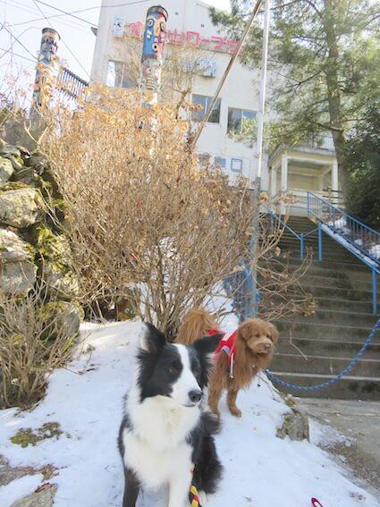 雪の上に座る犬二匹の写真