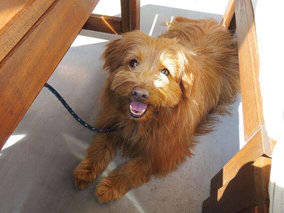 ソファ席で座る犬の写真