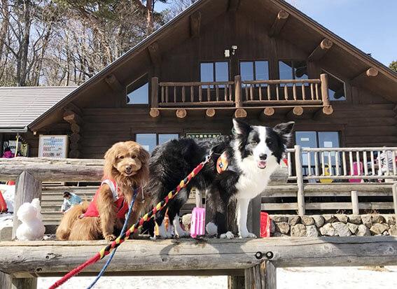 山小屋と犬の写真