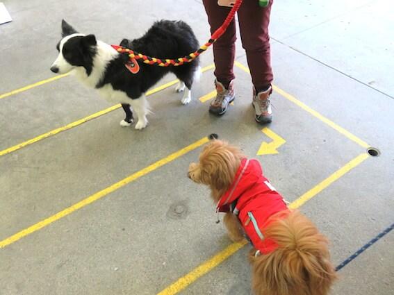 ボーダーコリーとMIX犬の写真